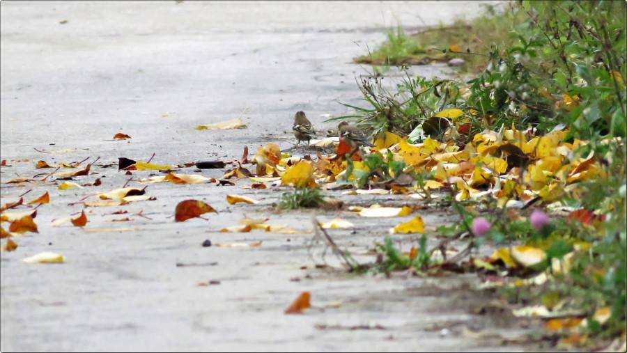 День 11. «На ковре из жёлтых листьев»
