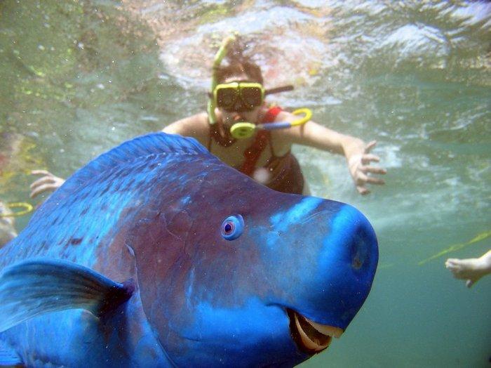 blue-parrotfish.jpg