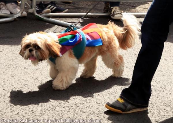 20130629-PrideDogs001