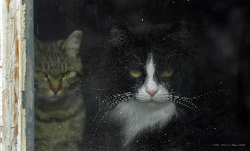 фотопленка-коты