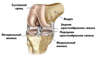 Перечислите основные суставы фиксатор локтевого сустава неопреновый