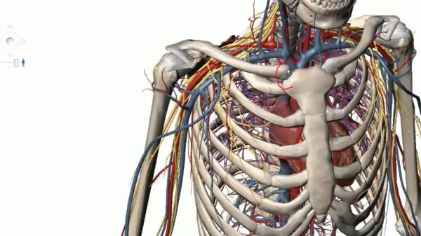 Ложный сустав ключицы лечение