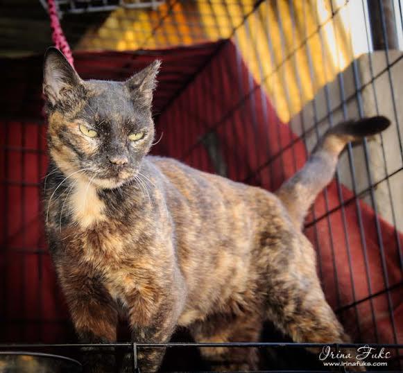 cat-3-coloured