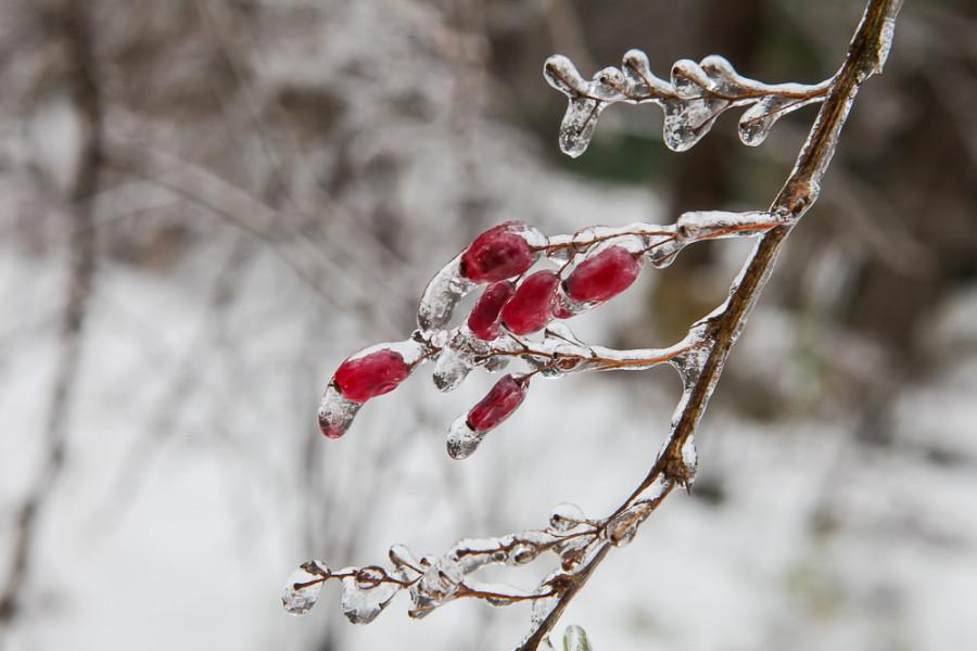 марту демотиваторы ледяной дождь актриса азиатского происхождения