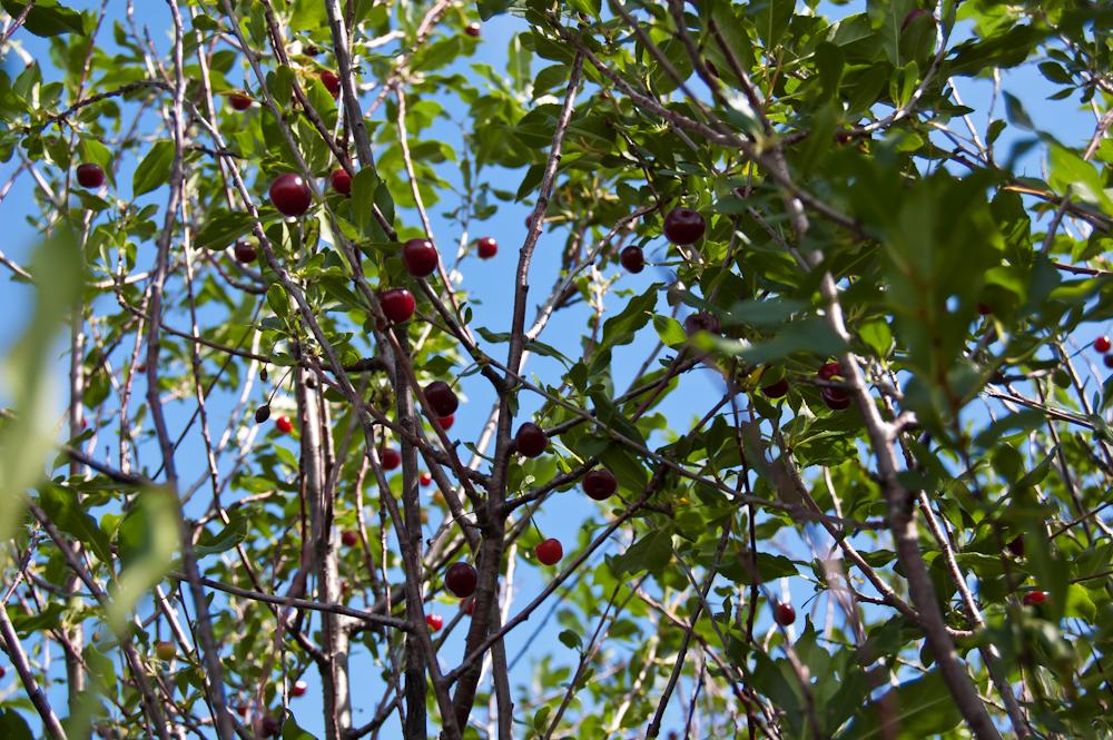 ягоды-11.jpg