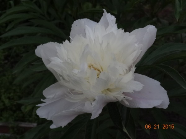 белый сад 008