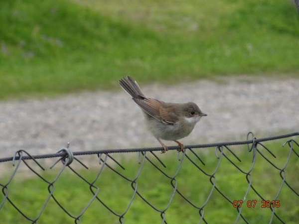 птички 002