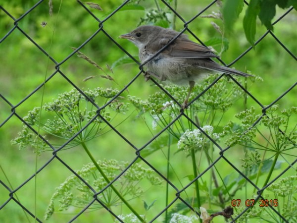птички 005