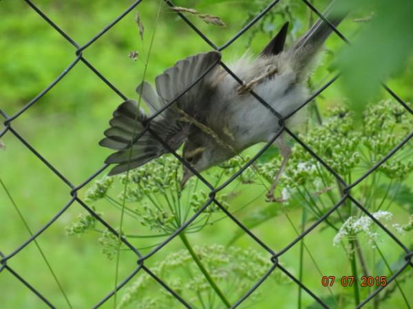 птички 006