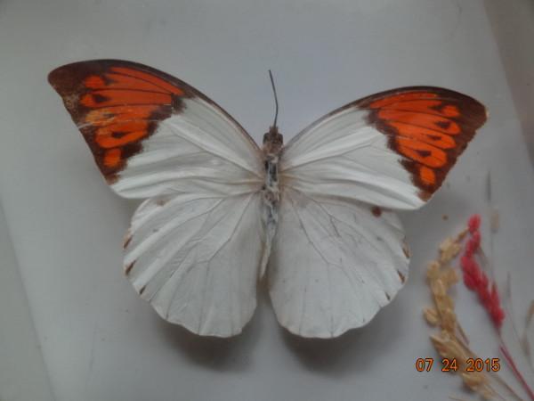 насекомые 014