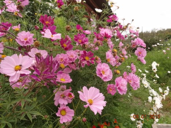 цветочки 016