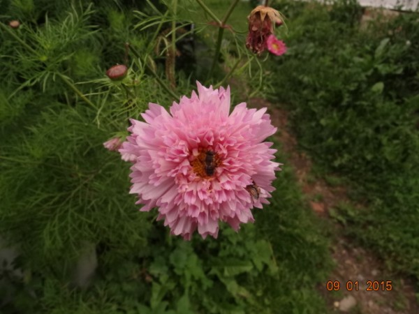 цветочки 018