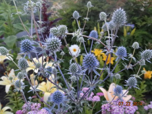 цветочки разные 074