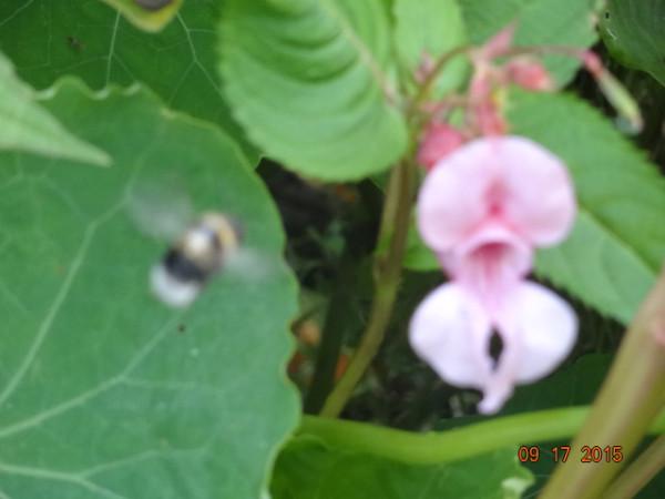цветочки 052