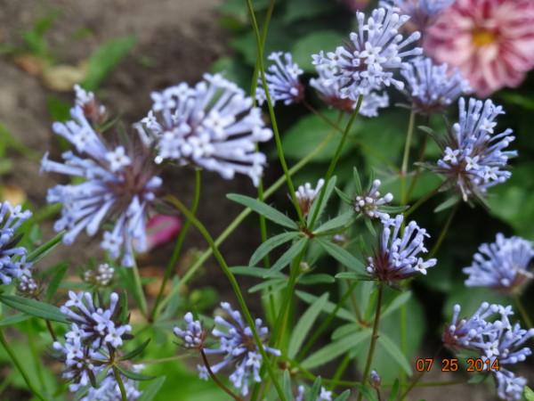 цветочки разные 025