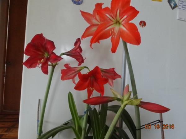 комнатные цветы 028