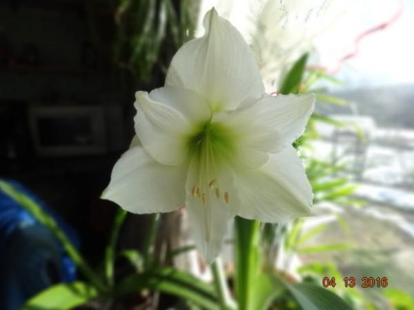 комнатные цветы 035