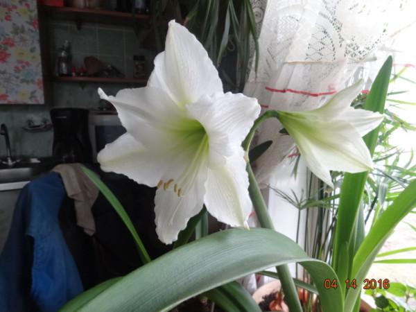 комнатные цветы 051