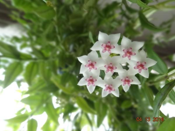 комнатные цветы 036