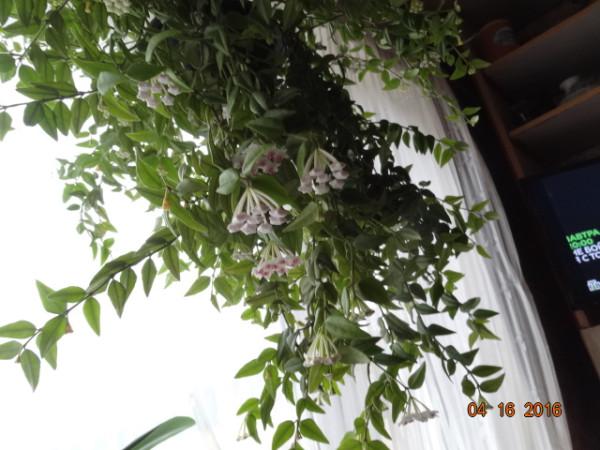 комнатные цветы 049