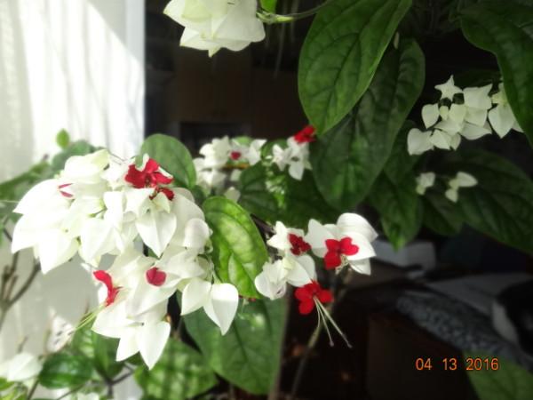 комнатные цветы 038