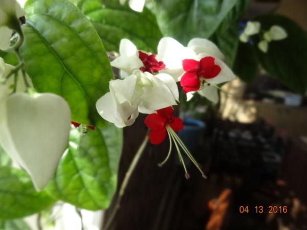 комнатные цветы 040