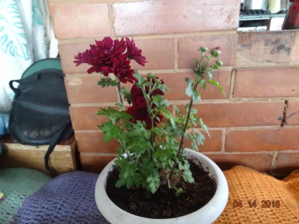 комнатные цветы 046