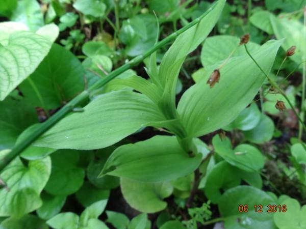 маленькое орхидейное болотце 019