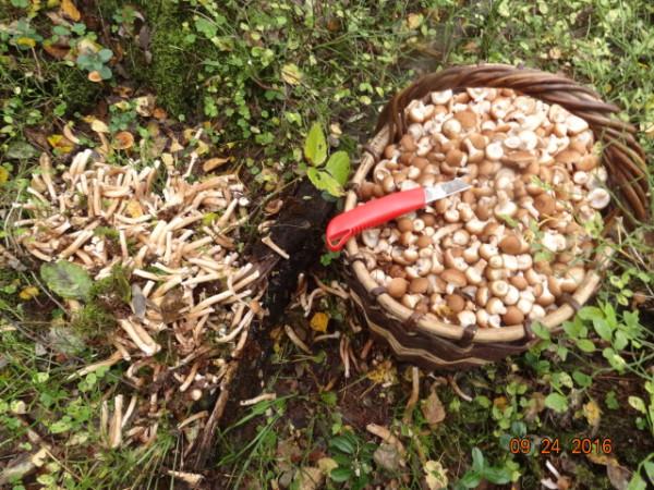 грибы 039