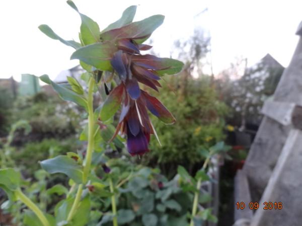 последние цветы 012