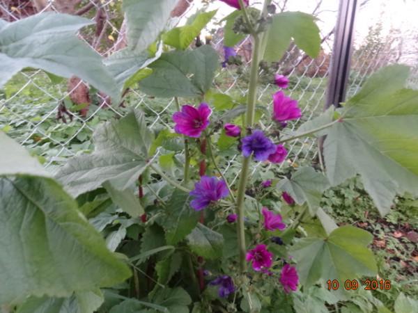 последние цветы 018