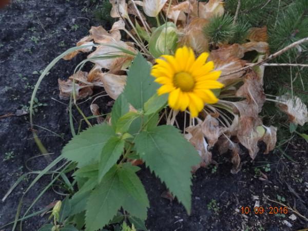 последние цветы 022