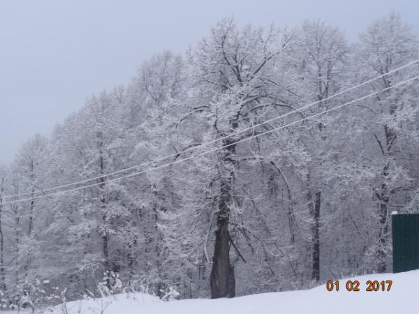 зима опушки 002