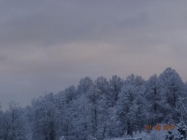 зима опушки 033