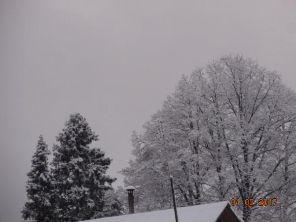 зима опушки 035