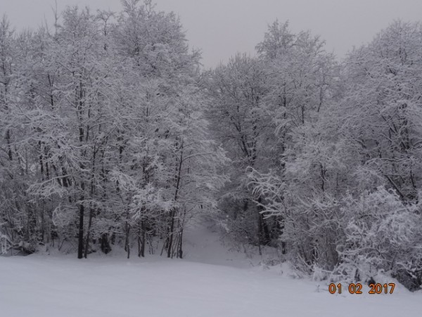 зима опушки 014