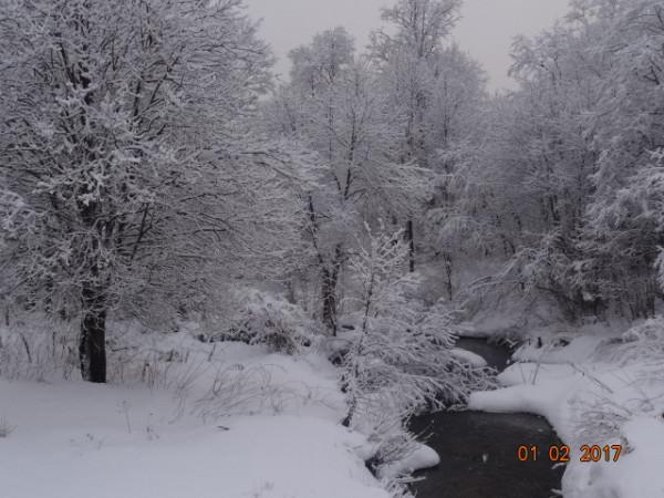 зима опушки 016