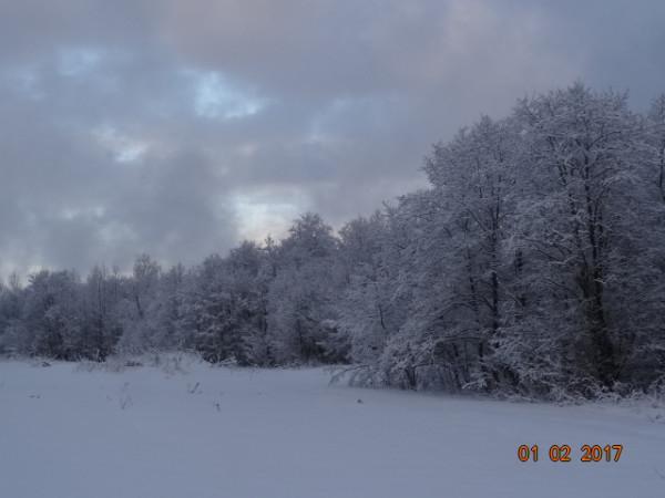 зима опушки 017