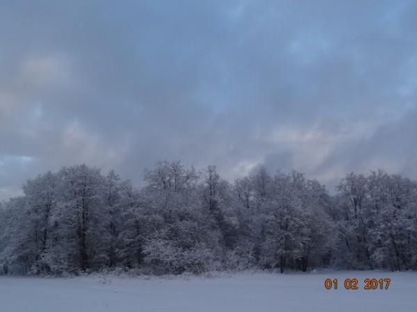 зима опушки 021