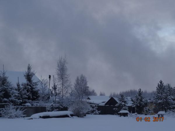 зима опушки 029