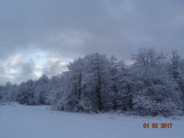 зима опушки 031