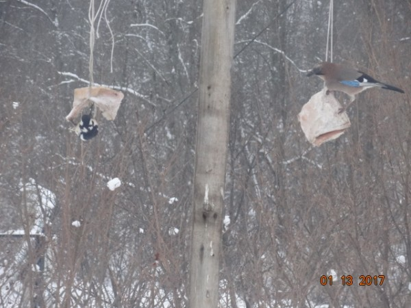 птички 016