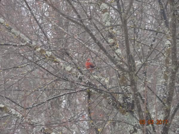 птички 063