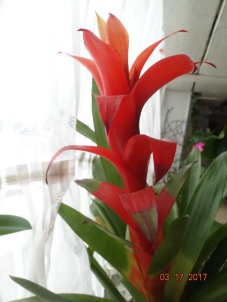комнатные цветы 065