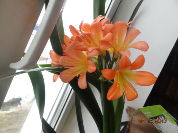 комнатные цветы 070
