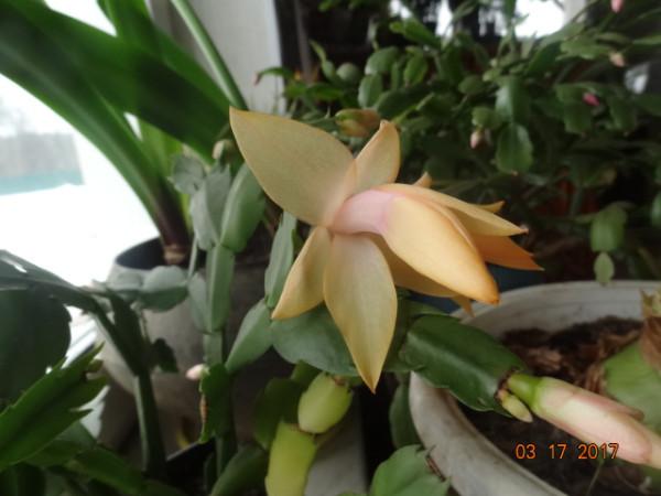 комнатные цветы 062