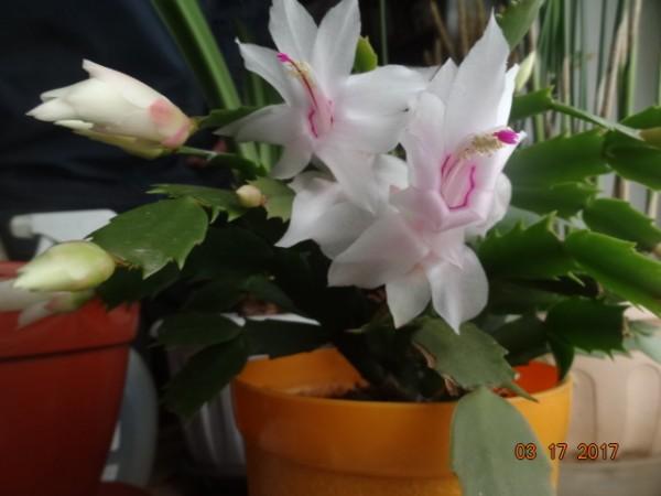 комнатные цветы 063