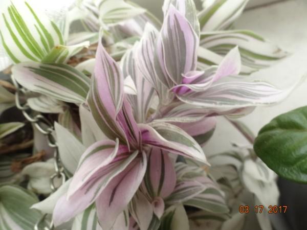 комнатные цветы 067