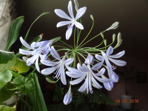 комнатные цветы 055