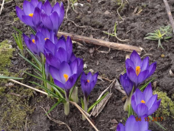 весна 030